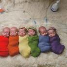 šestorčatá, umelé oplodnenie, dvojčatá, rodina s deviatimi deťmi, tehotenstvo