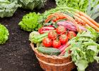 Liečivé účinky jarnej zeleniny: mrkva, špargľa, šalát a reďkovka