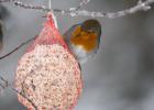 TIP na aktivitu s deťmi: Lojové gule pre vtáčiky