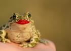 Motivácia na dnes pre mamy: Zjedzte tú žabu!