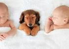 Ako zoznámiť psíka sbábätkom?