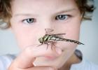 nástrahy lesa, deti v lese, kliešť, had, osa, včela, uštipnutie