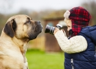canisterapia, pes, psi, deti, dieťa, terapia