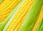 Niekoľko faktov o kukurici