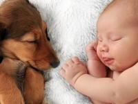 Špina a alergény zo zvierat deťom prospievajú