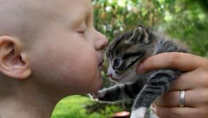 Mačka vycíti smútok aj bolesť. Vibrácie jej pradenia majú terapeutické účinky