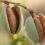 HIPP mandľový olej