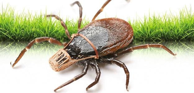TIP: Domáci repelent proti kliešťom a komárom