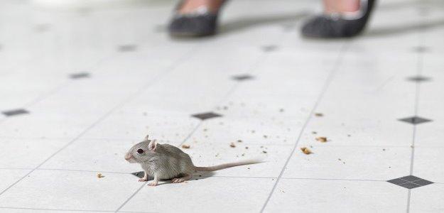 Máme doma myš