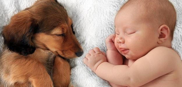 Šteniatko verzus novorodenec