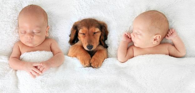 Máme psa a budeme mať dieťa - je pes vhodný k bábätku?