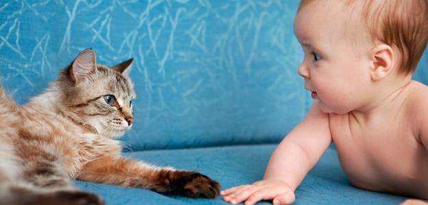Keď zvieratká liečia