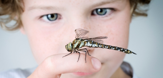 bodnutie hmyzom, alergická reakcia, hmyz, osa, včela, anafylaktický šok