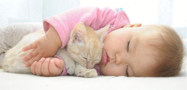 Dieťa a mačiatko: 12 dôkazov, že toto puto funguje!