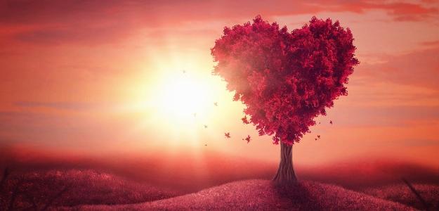 láska, priateľstvo, partnerstvo, túžba, sny