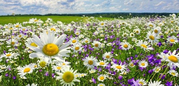 Homeopatiká a dýchacie cesty