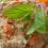 Chutná mrkvová nátierka s chlebom