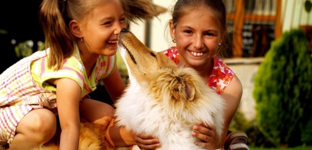 Vhodný pes do rodiny s deťmi? Kólia dlhosrstá.