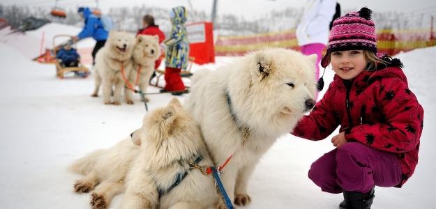 Psy na lyžiach